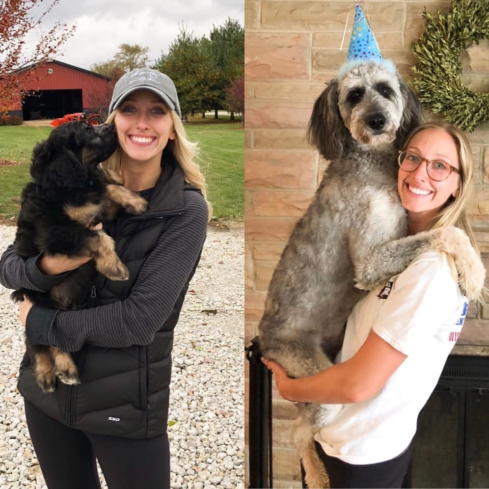 From 8 Weeks to One Year, Black Phantom Aussiedoodle with Fading Gene